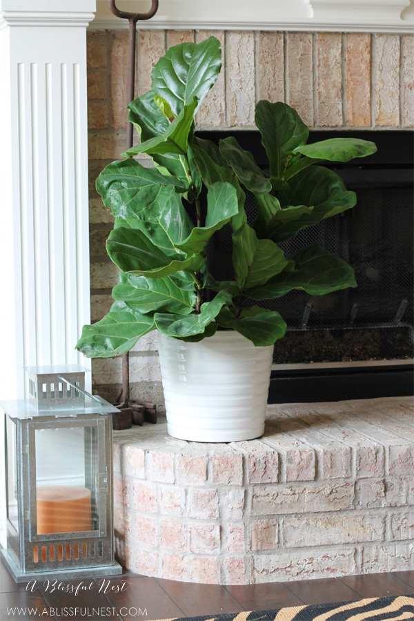 Decorating with House Plants by A Blissful Nest