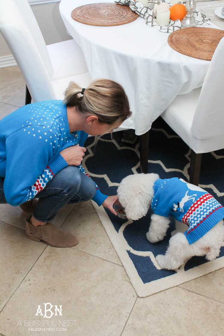 We adore Cesar dog food and are celebrating with these super cute matching sweaters! https://ablissfulnest.com/