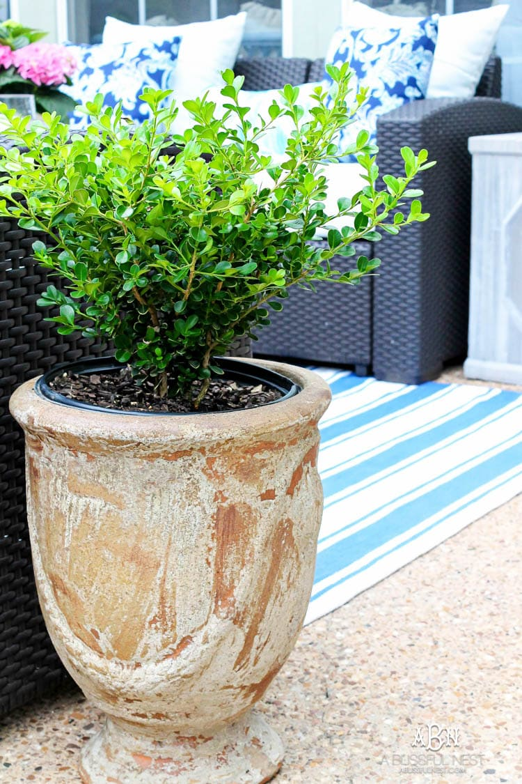 summer backyard patio refresh with a fresh color palette