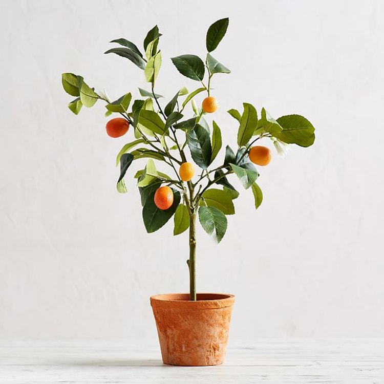 This Faux Potted Kumquat Tree is a perfect piece of decor to add to your home! #ABlissfulNest