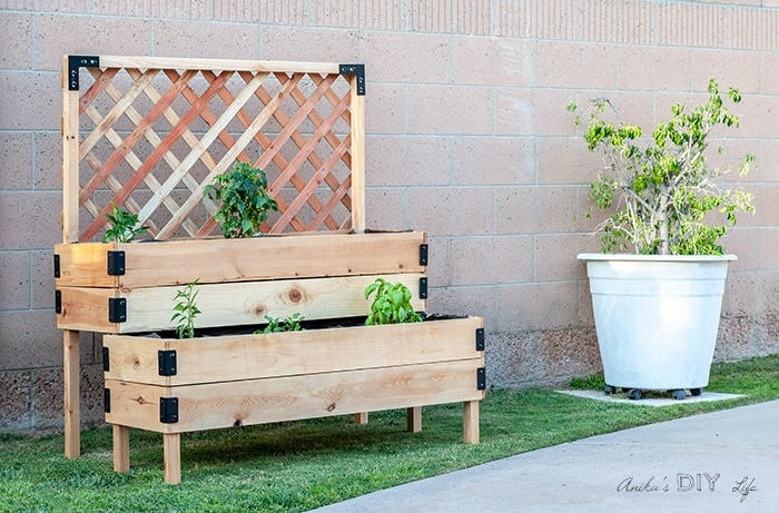 tied raised garden beds with a trellis