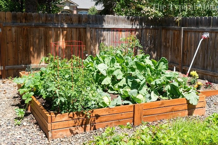simple wood raised garden bed