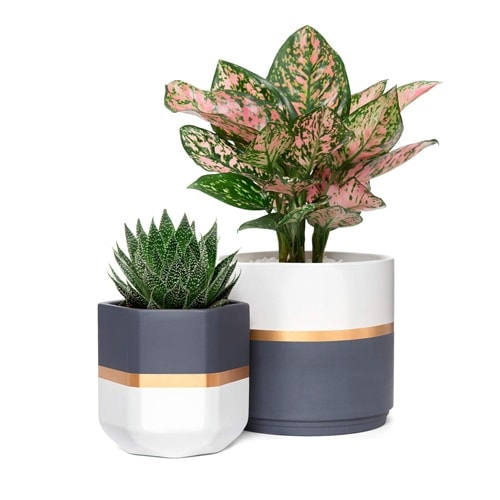 These modern geometric planters are so fun and something so different! #ABlissfulNest
