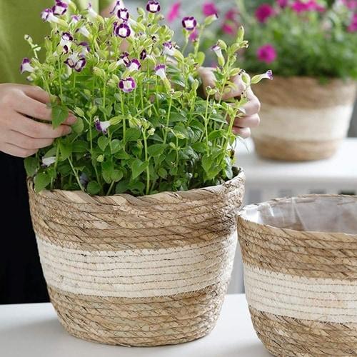 These seagrass woven planters are so pretty! #ABlissfulNest