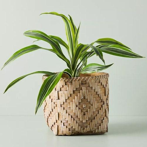 This planter is such a fun statement piece! #ABlissfulNest