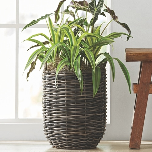 This rattan planter is so pretty for both indoors and outdoors! #ABlissfulNest