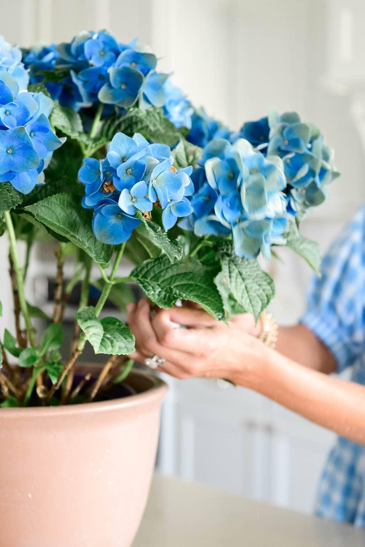 Blue hydrangea, potted plant, kitchen decor, white kitchen, kitchen style. #ABlissfulNest #whitekitchen #kitchendesign #summerkitchen